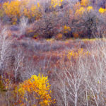 Late Color from Hwy. 2 near Little Sauk MN